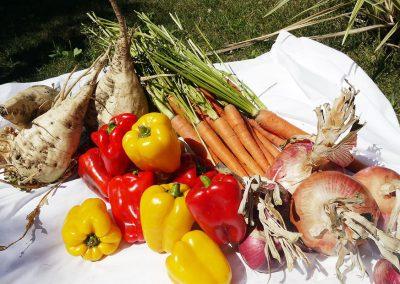 verdure-ribollitta